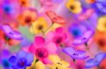 71767_kolorowe-rozmyte-kwiaty-tlo