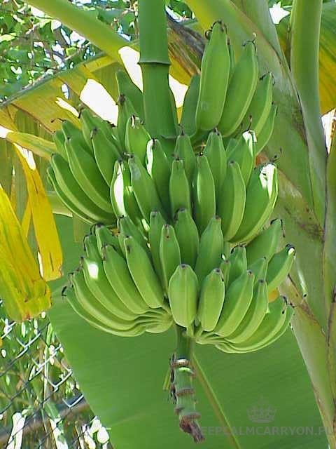 keepcalmcarryon-banany