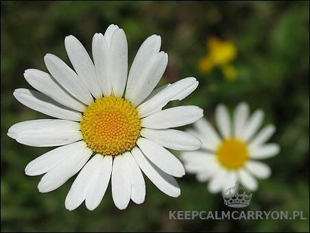 keepcalmcarryon-rumianek2