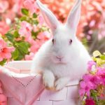 wiosna…co warto kupić ?