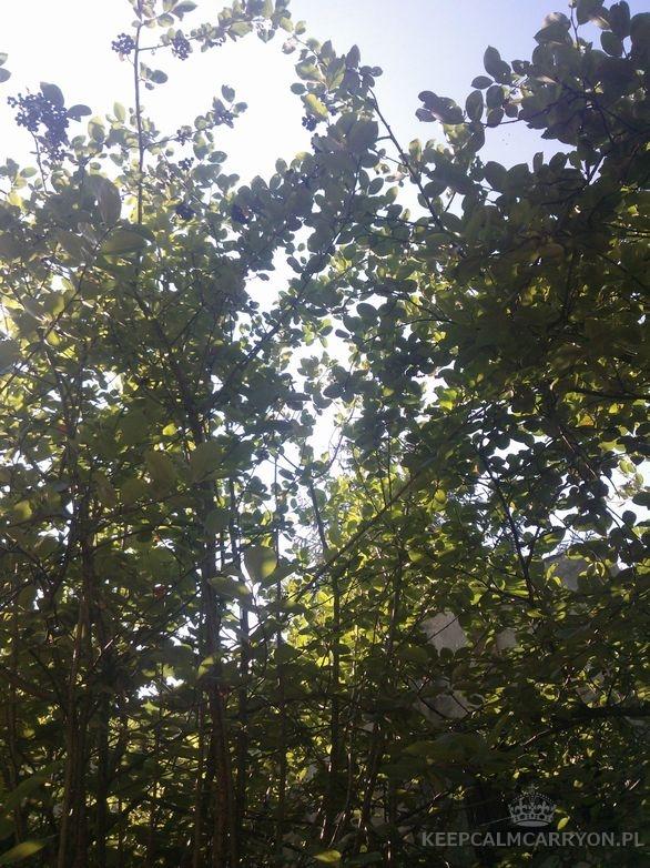 keepcalmcarryon-miesiąc w zdjęciach lipiec (24)
