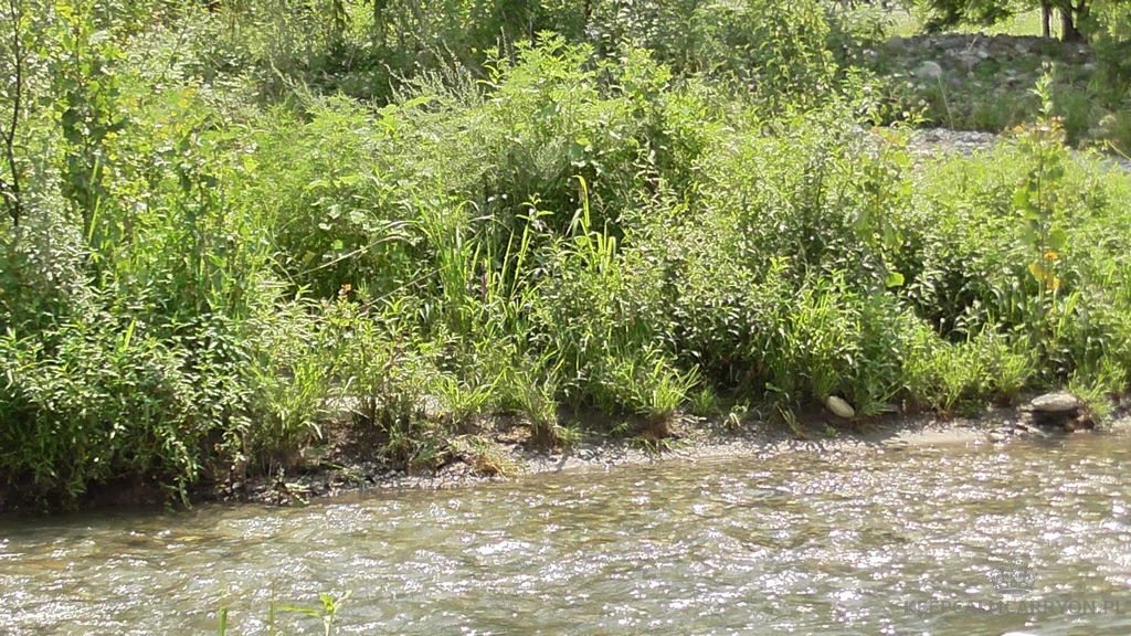 rzeka (12) keep